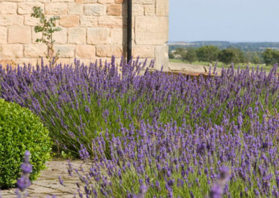 Swallow's End – Lavender